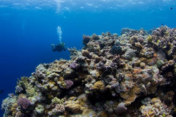 Acho que nasci no ecossistema errado porque, pra mim, felicidade é estar debaixo d´água (fonte: www.flickr.com/photos/tchami/)