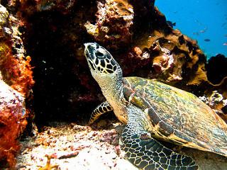 Você acha que vai cansar de tanto ver tartaruga, só que não! Elas são lindas demais (fonte: www.flickr.com/photos/39891373@N07/)