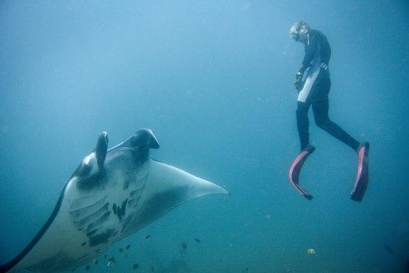 Talvez eu devesse aprender mergulho livre.